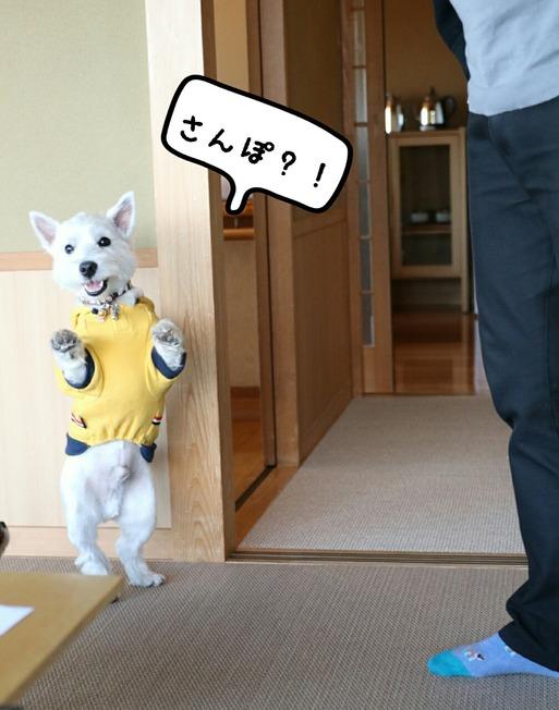 【伊豆旅行】テンションがあがっちゃってる犬