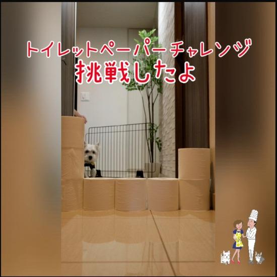 【犬】トイレットペーパーチャレンジ