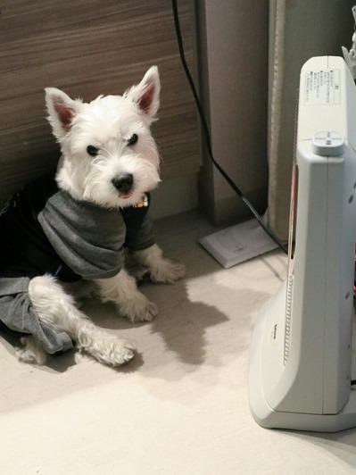 【犬】寒いの・・・か?