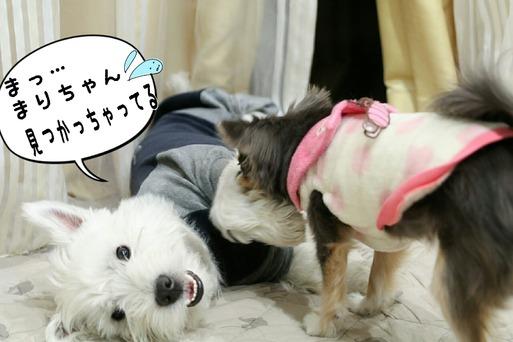 【犬】有り余ってる犬たちの戦い夜編