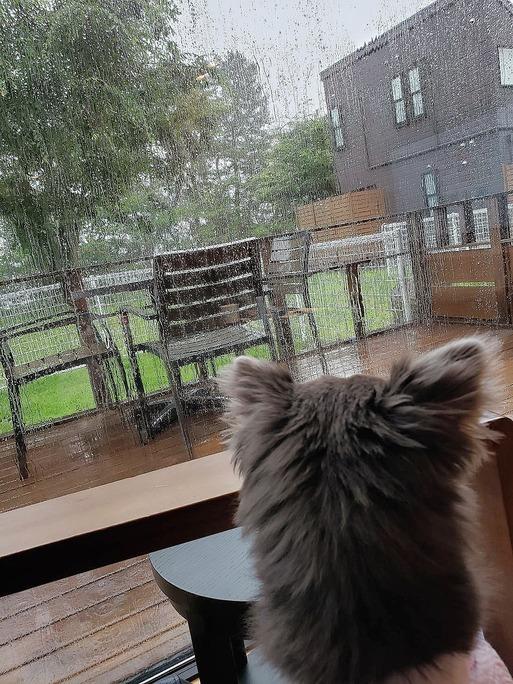 【犬と旅行】琵琶湖地方、本日、大雨なり…
