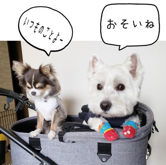 【犬とおでかけ】お泊まり!!