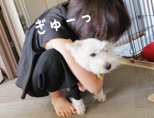 【ウエスティ】飼い犬と飼い主の気分のギャップ