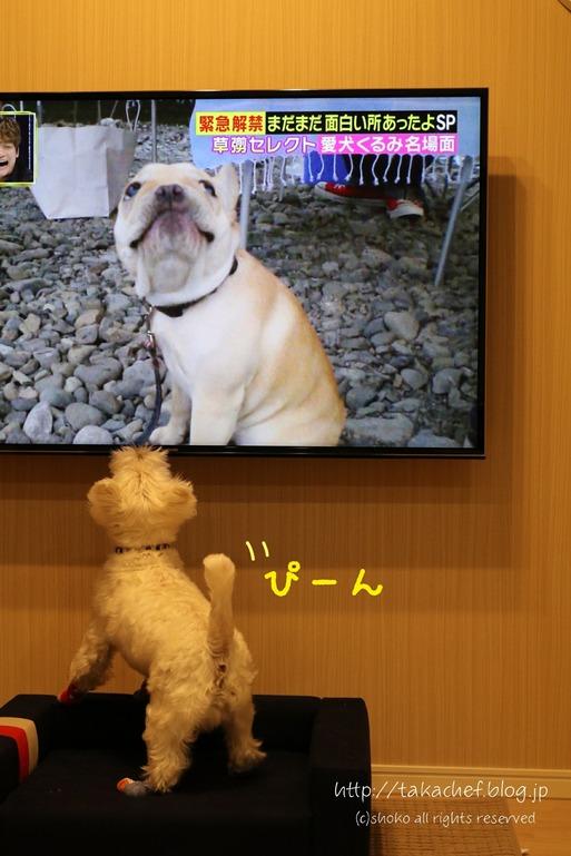 【犬】画面の友