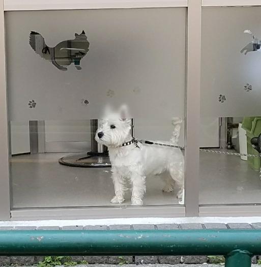 【犬】黄昏のゆきっつぁん