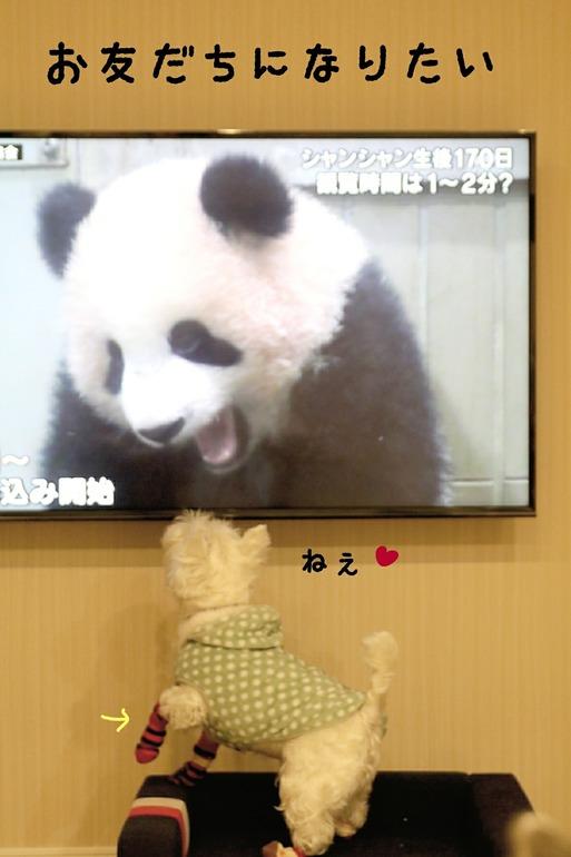 【犬】パンダと友達になりたいぼく。