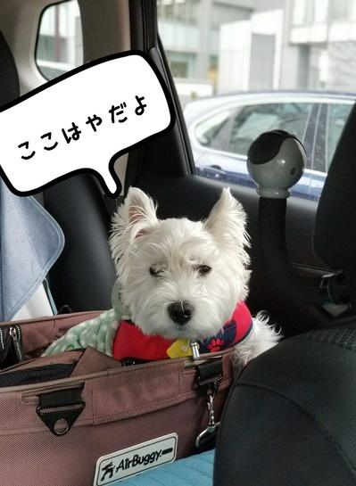 【犬】ゆきちのたくらみ。