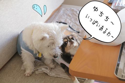 【日記&犬】極寒・・・。と、バーベキュー準備と、その時をねらう犬