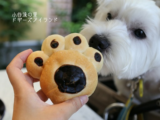 【犬旅】ベーカリー編