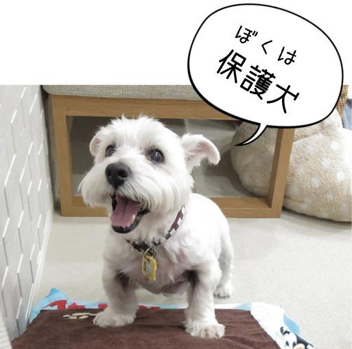 【犬】保護犬と保護犬じゃない犬 と 保護犬ジャン&アリー