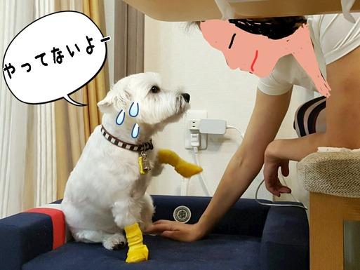 【犬】言い聞かせてみる。