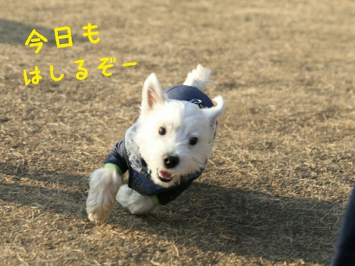 【犬】ドックランへGO!