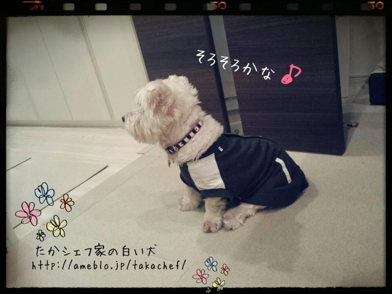 ●lineだより ~待つ犬~
