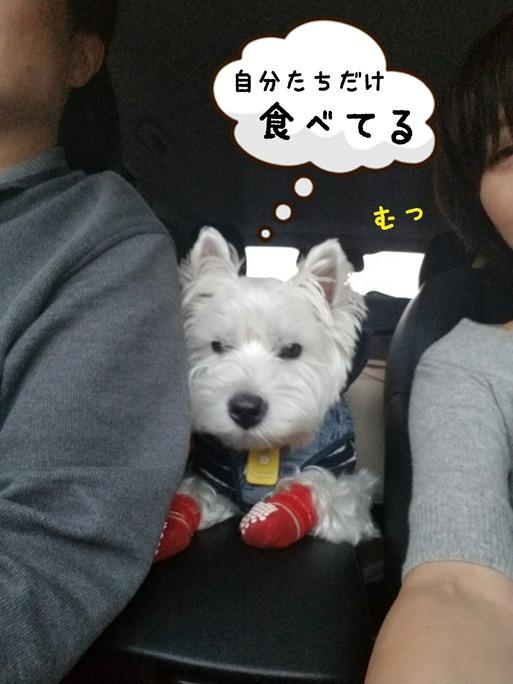 【犬】ぼくの将来の夢 車中にて