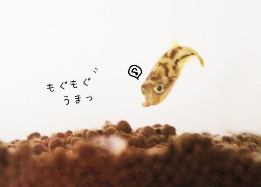 19-04-12-09-33-18-803_deco