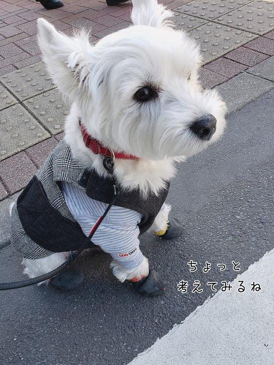 【犬】いつもの希望!