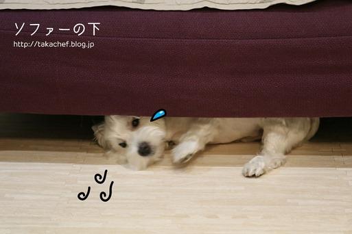 【犬】大丈夫か・・・