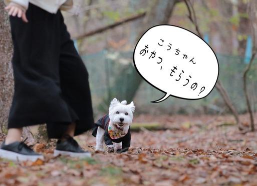 【ウエスティ】遊びたい表現を上手にできない犬