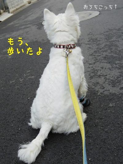 【犬】ブランカの日記 朝のおさんぽ
