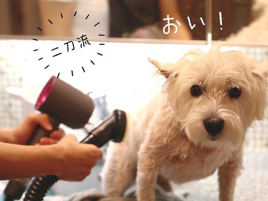 【犬グッズ】ドライヤー