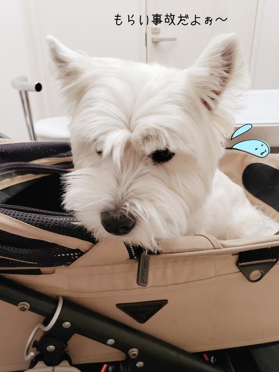【犬】フィラリアの検査もした。