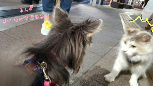LINE便り ~お散歩編。猫パンチされる~
