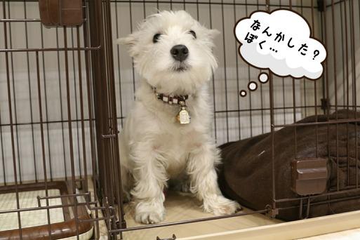 【犬】あ~~っ!!