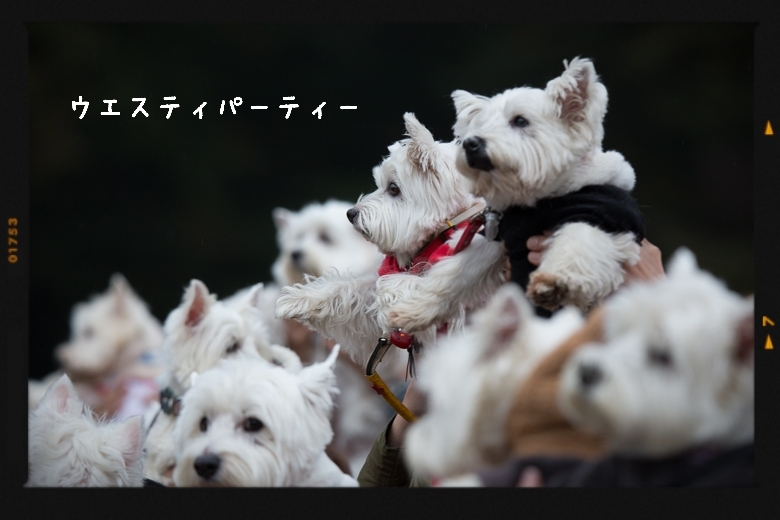 【ウエスティパーティ2017】記念撮影