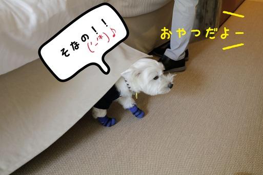 【ウエスティ】基地!