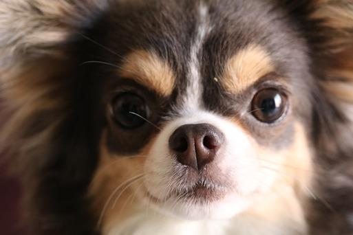 【犬】あら~