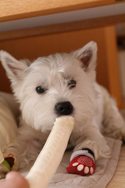 【犬】表情から読み取るワンコの本心