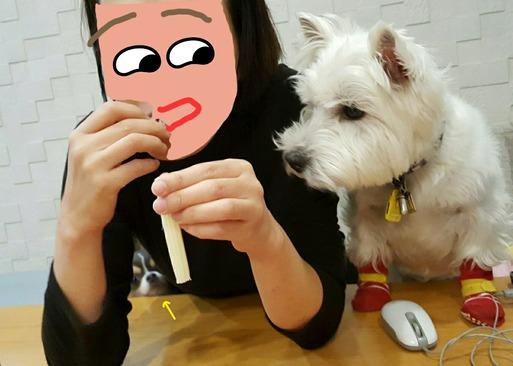 【犬】ちょーだい。