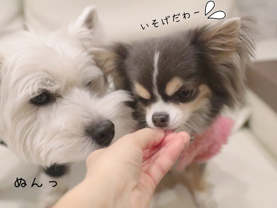 【犬】強力わかもと と、薬屋さんのお心遣い
