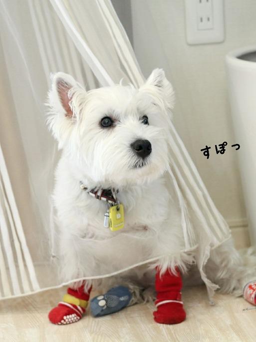 【犬】ゆきちが、大好きなベランダにでてこない訳。