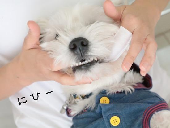 【犬グッズ】歯磨きグッズ