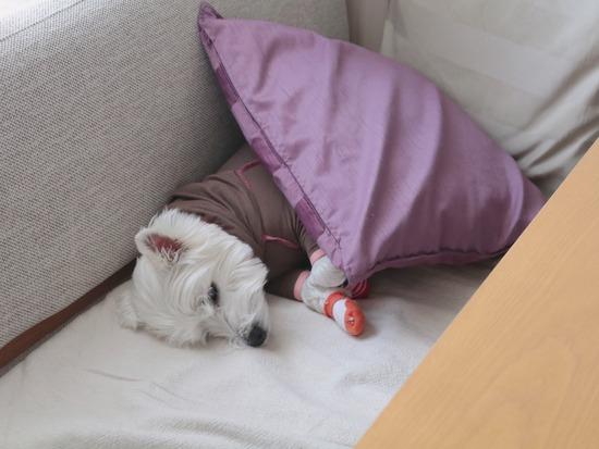 【犬】犬が下敷きになっとる!!!
