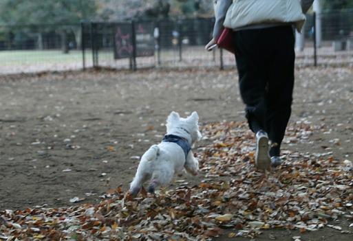 【犬】ゆきちに嫌われてる飼い主の心のよりどころ。