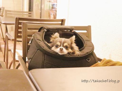 【犬グッズ】リュックの検討。序:型崩れしないリュックが好きな理由