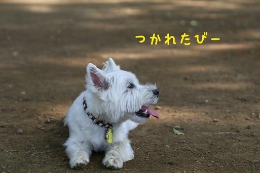 【犬】おいかけっこ