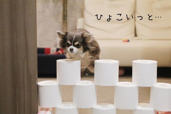 【犬動画】トイレットペーパーチャレンジ その③