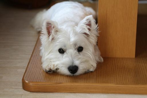 【犬グッズ】フリマに出すもの・・・