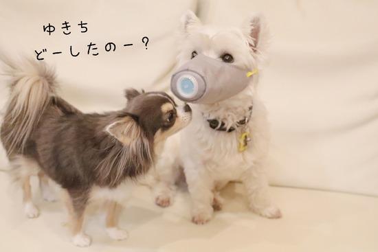 【犬グッズ】犬マスク