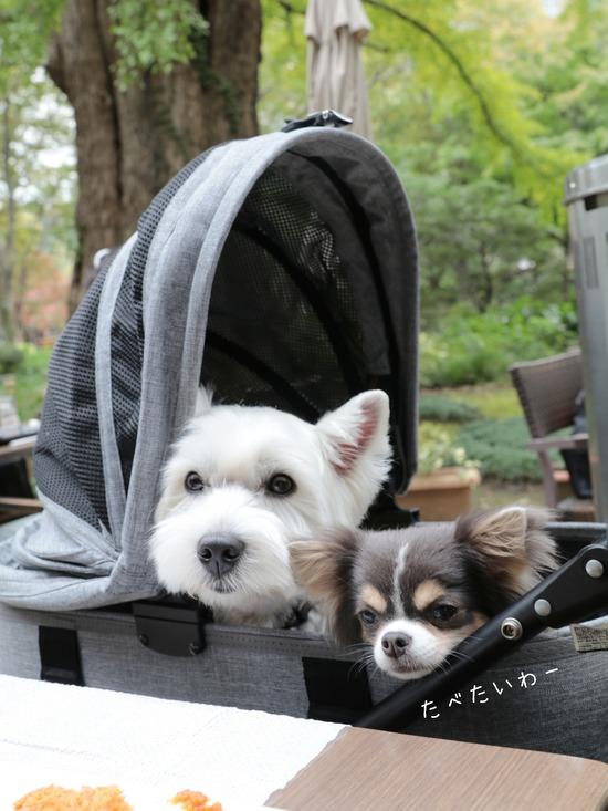 【犬とおでかけ】日比谷公園で、ゆきちがビビっちゃった事