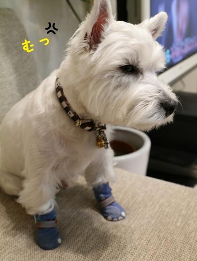 【犬靴】靴物語⑦特許だな(笑)