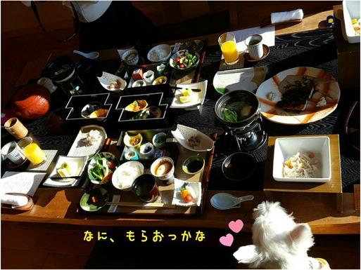 【伊豆旅行】朝ごはん。~ツメば甘くてうまうまにありつけなかった犬~