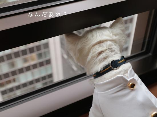 【犬】ペニンシュラの夜