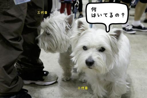 18-04-02-07-27-07-653_deco