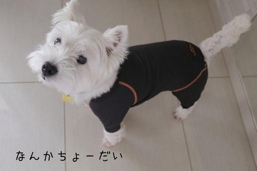 【犬グッズ】あたらしい皮膚保護服
