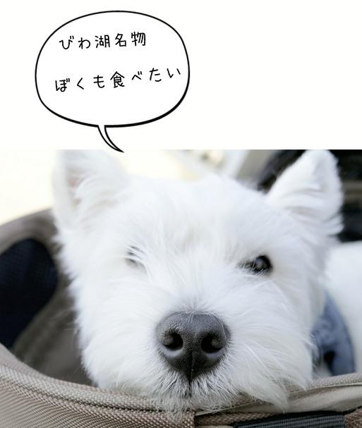 【犬旅】びわ湖にきたぞ!