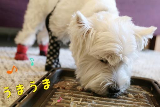【犬】失敗ジャーキー